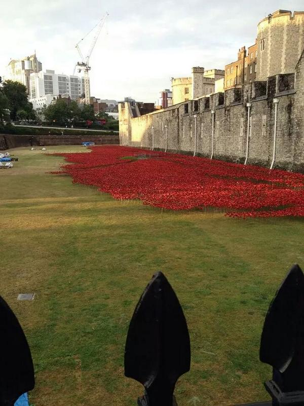 RT Tower of London epic MT @ravenmaster1: 50,000 poppies, 820,000 poppies to go: 1 for each life lost in First World War  - embedded image