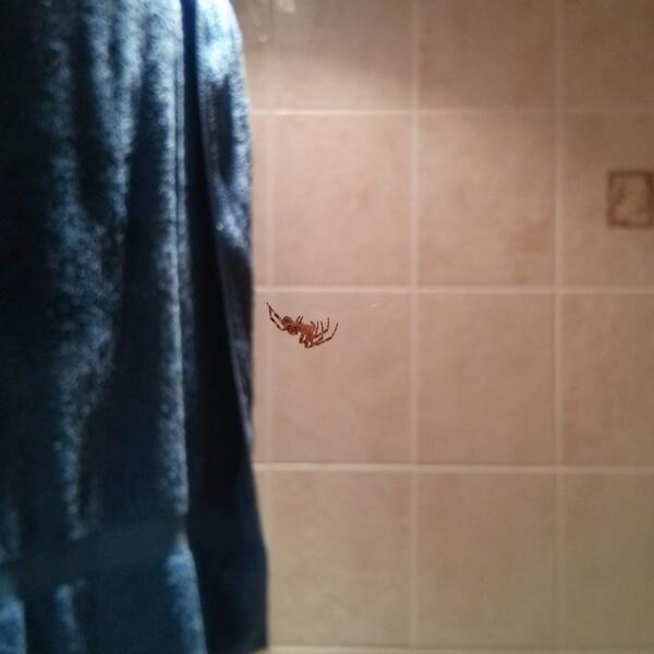 Bathroom invader. #spiderman  - embedded image
