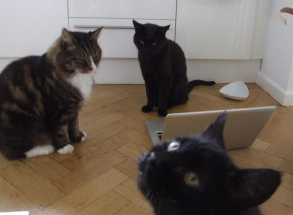 RT My cat is sad because my other cats claim to hate the Daily Mail but still post links to it, boosting its ad revenue.  - embedded image
