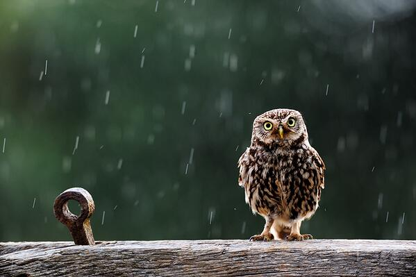 "RT ""Singing In The Rain"" by @KINGFISHER1972: http://t.co/raJapFBCBK via @500px #cute  - embedded image"