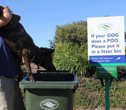 If your dog does a POO Please put it in the a litter bin. #justFollowingInstructions  - embedded image