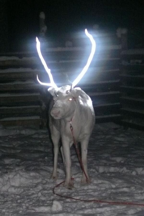 In Norway they're spraying reindeer antlers w a reflective coating to protect them from cars http://t.co/gYe9EgFdii http://t.co/mtiq89AItU - embedded image