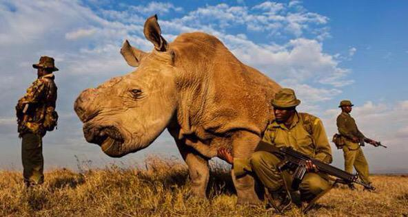 RT Armed guards in Sudan protect the last male northern white rhino on earth. His species survived for 50 million years.  - embedded image