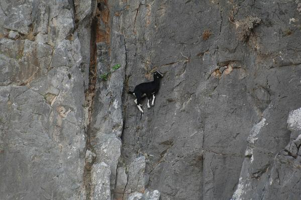 RT im not even sure goats actually use physics  - embedded image 1