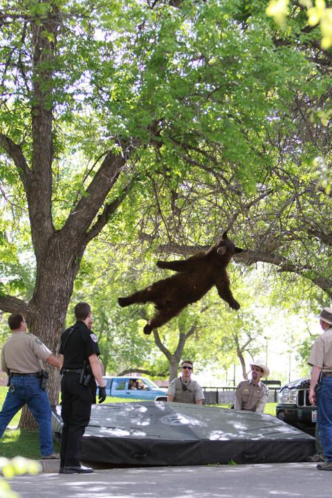 RT In Birmingham in the autumn, random Bears fall from trees like leaves.If one falls on you, you keep it. #FoxNewsFacts  - embedded image