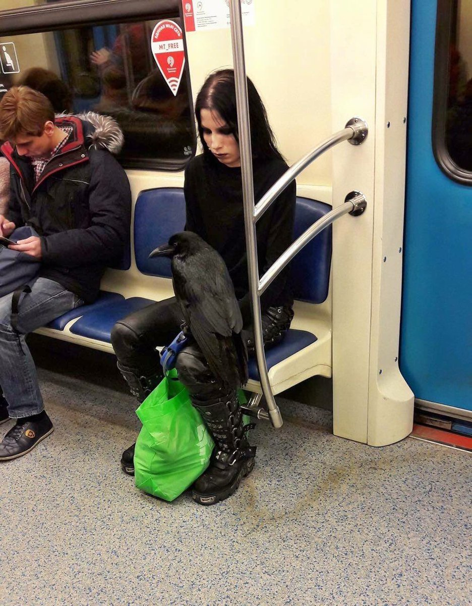 RT Sure, you're goth, but are you dejectedly riding the subway with your raven goth?  - embedded image