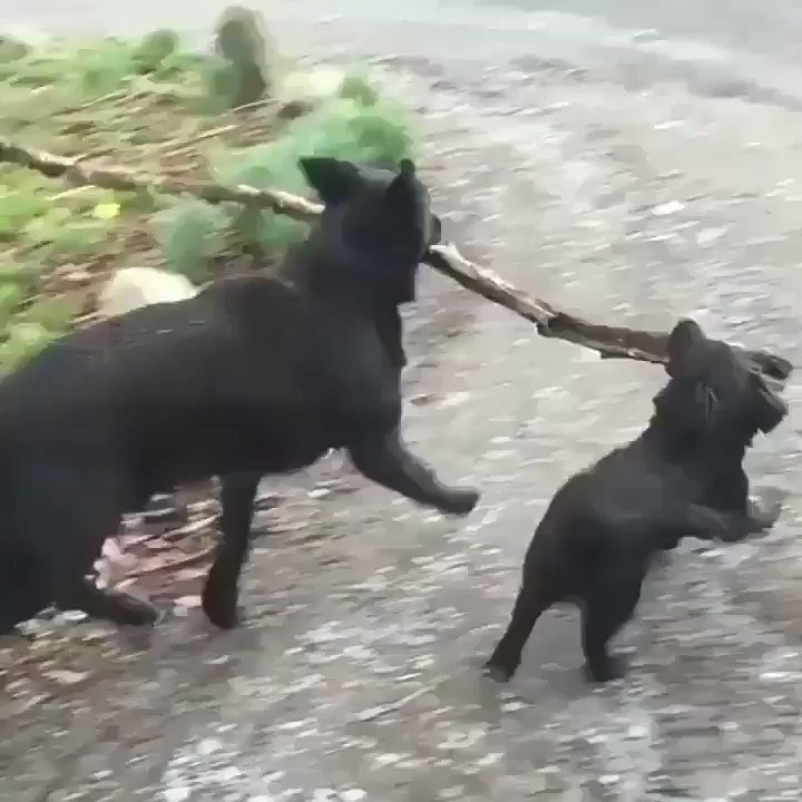 RT The Branch Manager and the Assistant to the Branch Manager.  - embedded image