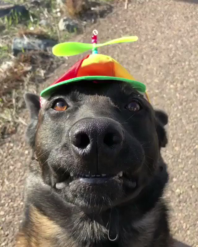 RT Pretty sure he hates his new hat  - embedded image