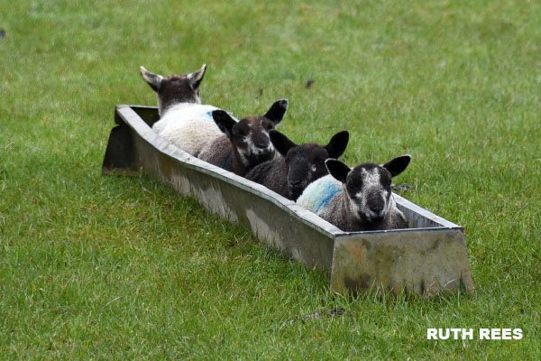 RT We're not predicting great things for the Welsh bobsleigh team at the Winter Olympics 2018... 󠁧󠁢󠁷󠁬󠁳󠁿 🤣  - embedded image